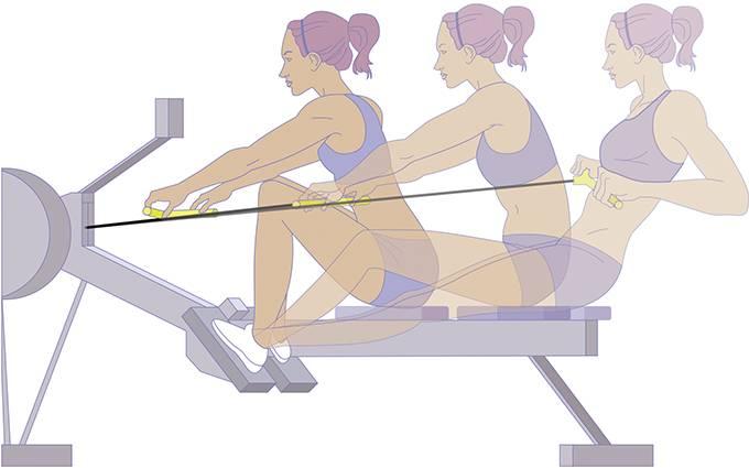 """Тренажер """"гребля"""": как правильно заниматься, какие мышцы работают - tony.ru"""