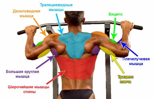 Подтягивания узким хватом: виды и техника выполнения упражнения