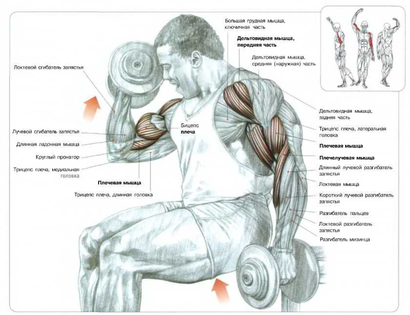 Почему от тренировок не растут мышцы