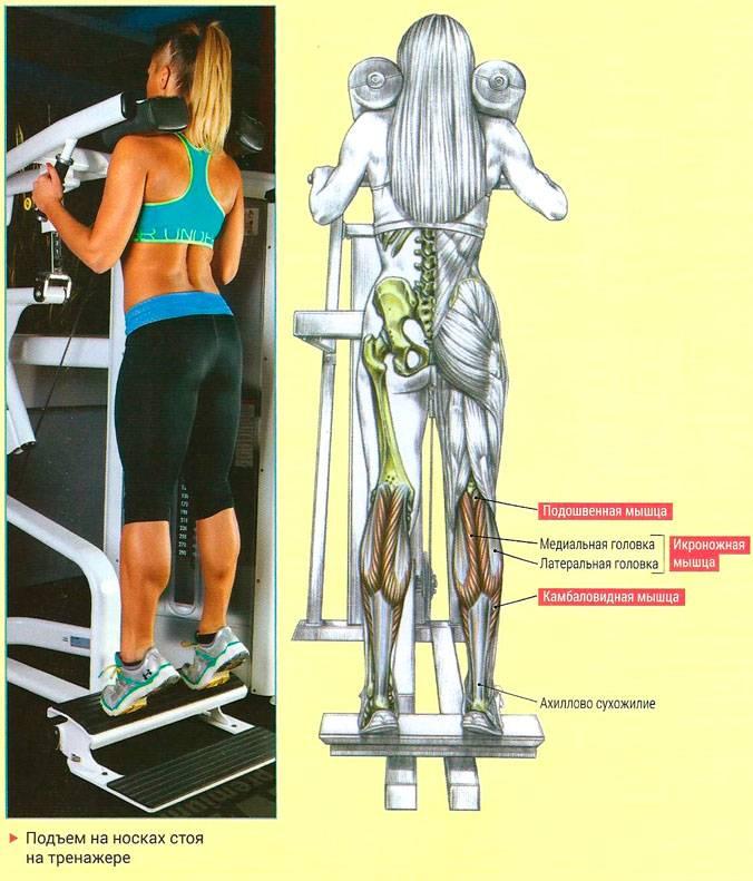 Подъем на носки сидя — sportfito — сайт о спорте и здоровом образе жизни