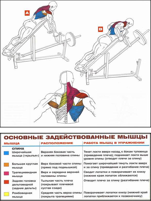 Эффективные упражнения для спины. тренируют широчайшие мышцы спины и трапецию
