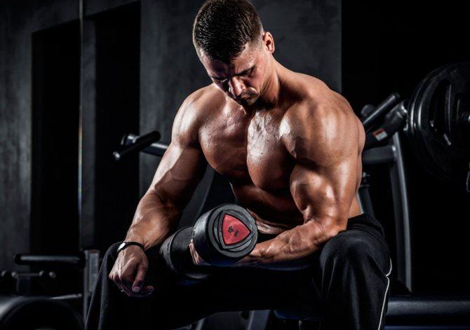 Бодибилдинг для начинающих: как набрать мышечную массу? | promusculus.ru