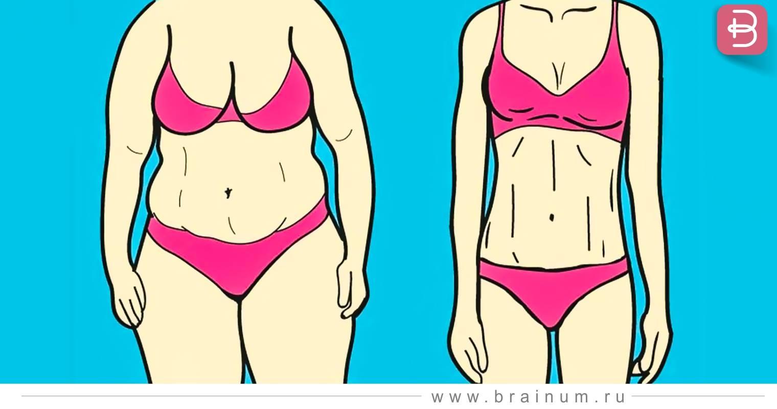 Похудение жир. как из жира сделать мышцы.