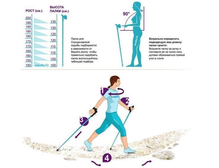 Скандинавская ходьба: как правильно ходить, держать палки, польза и минусы, противопоказания   азбука здоровья