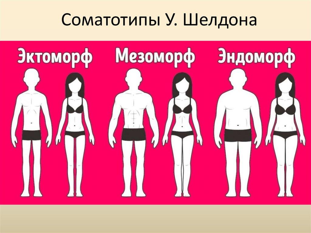 Типы телосложения: эктоморф, мезоморф, эндоморф