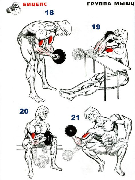 Как растут мышцы