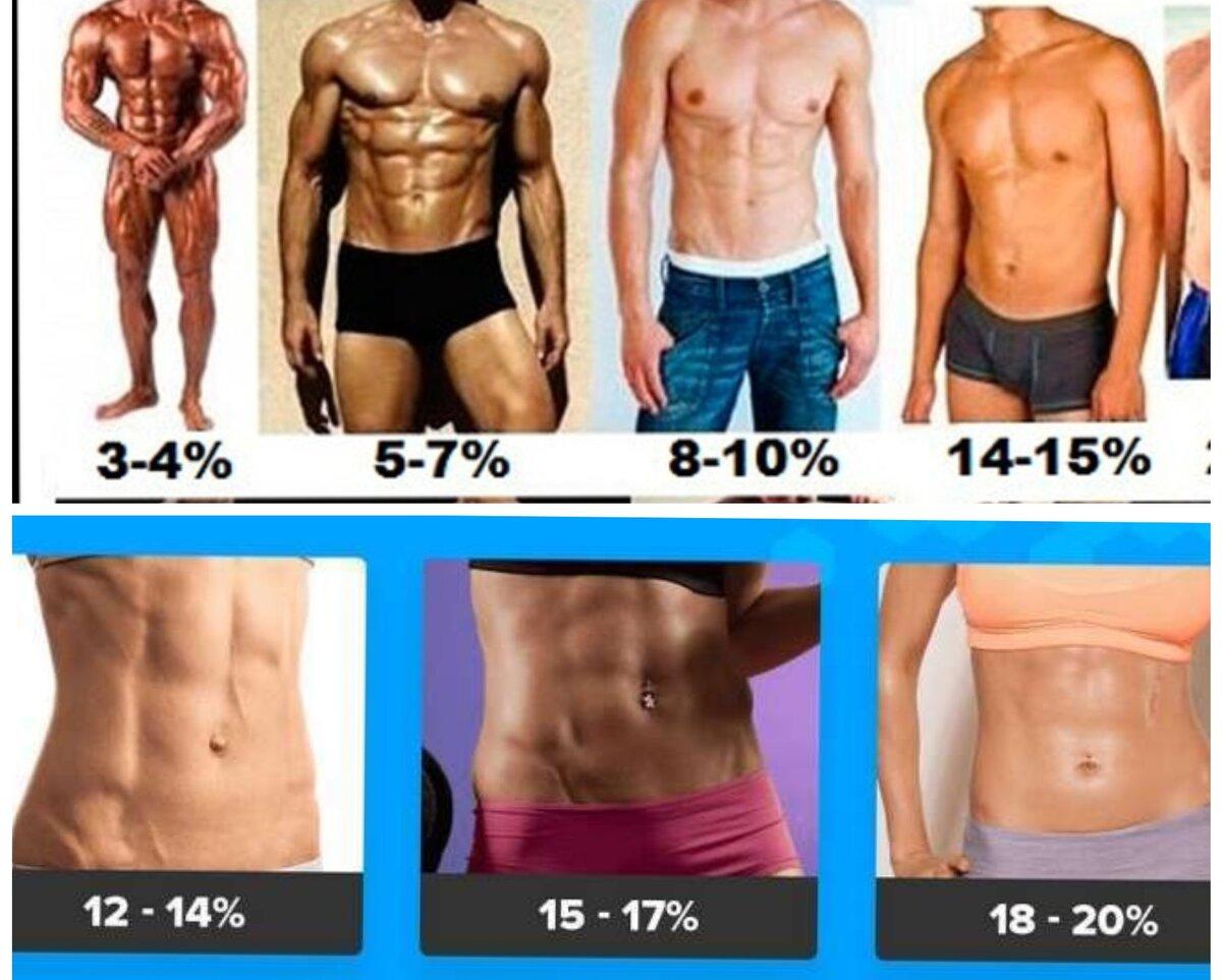 Цена низкого процента жира в организме – зожник  цена низкого процента жира в организме – зожник
