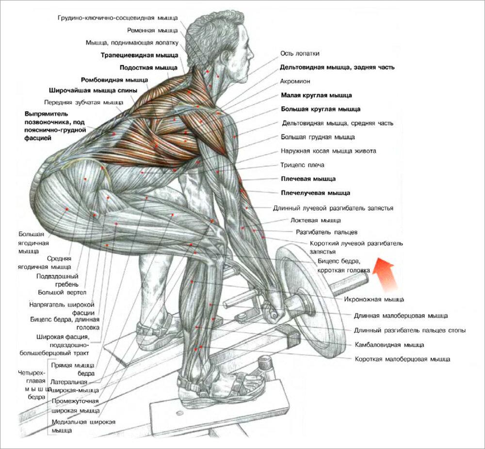 Тяга т-грифа в наклоне — sportfito — сайт о спорте и здоровом образе жизни