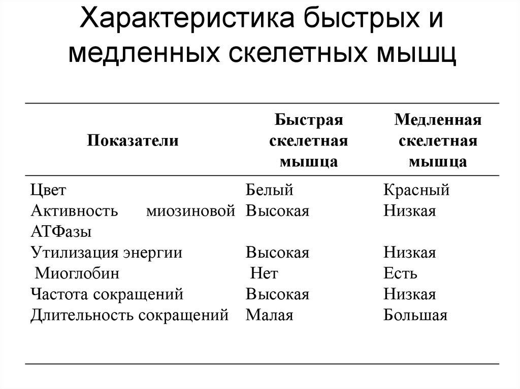 Типы мышечных волокон. структура мышечных тканей   musclelife.ru