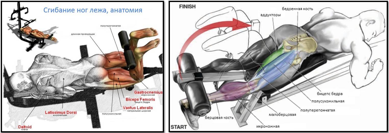 Сгибания ног лежа на животе в тренажере — техника выполнения упражнения, ключевые моменты и примечания