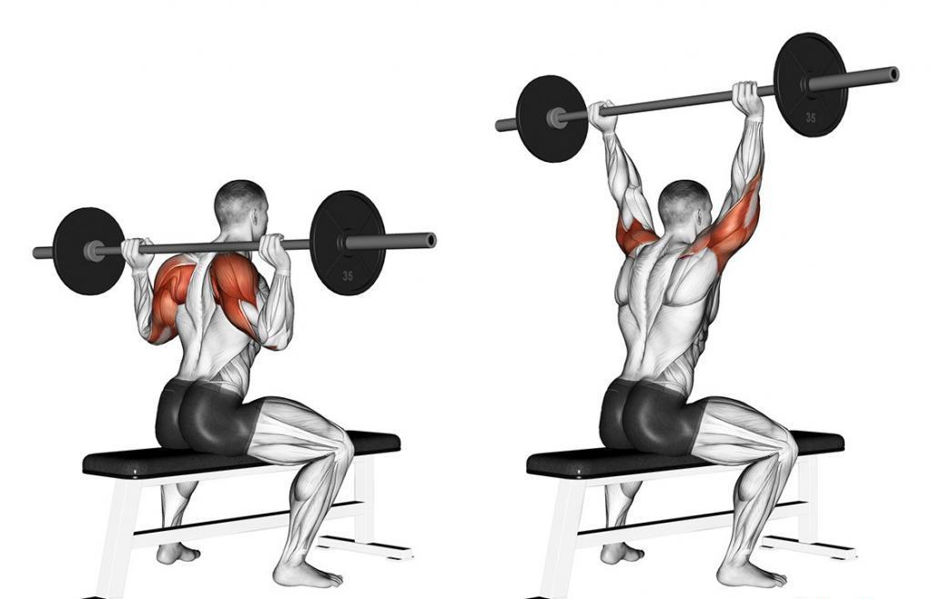 Жим штанги сидя: правильная техника выполнения упражнения
