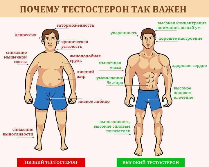 Как повысить тестостерон в организме мужчины