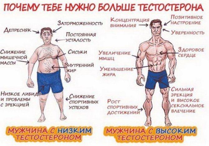Повышение тестостерона у мужчин естественными способами