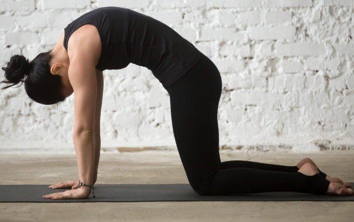 Собака мордой вниз — поза из йоги адхо мукха шванасана: техника выполнения асаны и как правильно делать упражнение (фото), польза и противопоказания