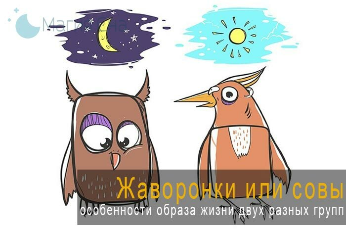 Как превратиться из совы в жаворонка? :: инфониак