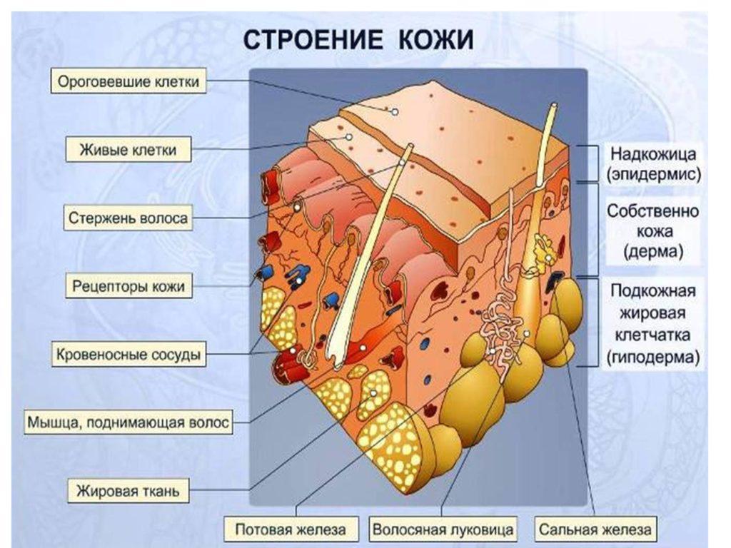 Глицерин для кожи лица: польза и вред, как использовать, рецепты масок