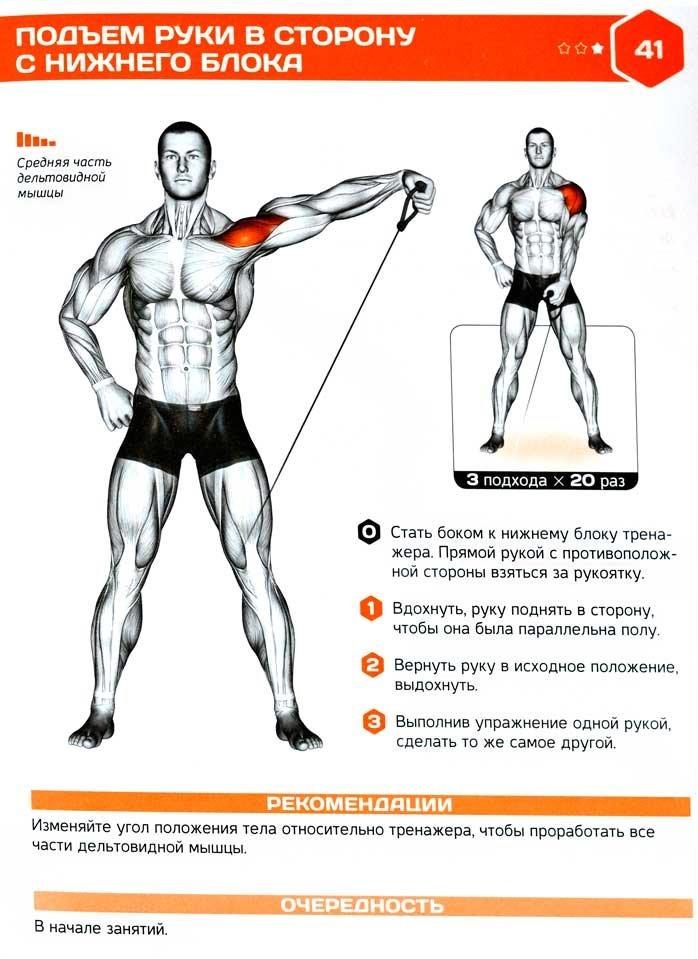 Разведение рук с гантелями в стороны стоя - упражнения - dailyfit