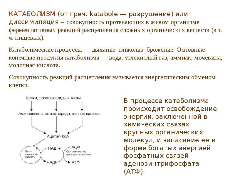 Понятие анаболизма и катаболизма. основные этапы. характеристика метаболических путей превращения основных классов органических веществ