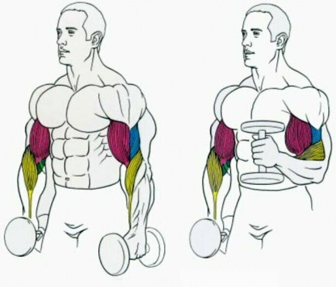 14 лучших упражнений на бицепс | бомба тело
