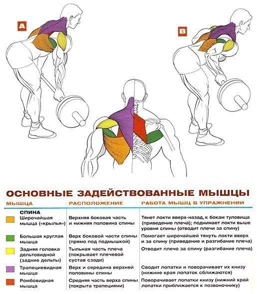 Как накачать спину штангой: топ 4 упражнения