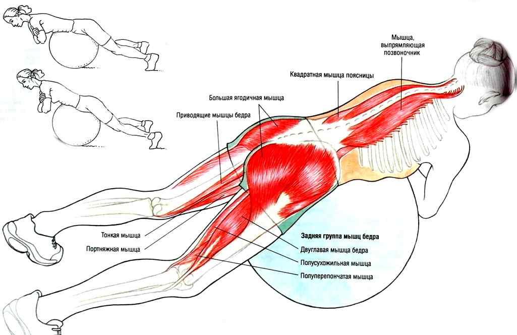 Мышцы стабилизаторы: способы укрепления позвоночника, тазобедренного и коленного суставов