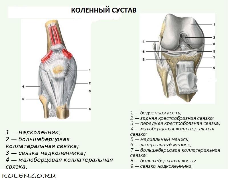 Лучшие упражнения для укрепления мышц и связок коленей в домашних условиях