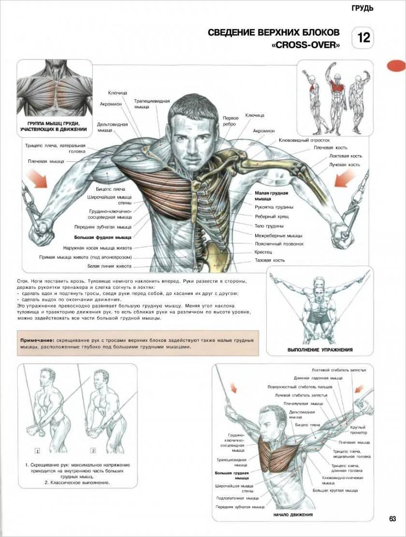 10 лучших упражнений на грудные мышцы в тренажерном зале