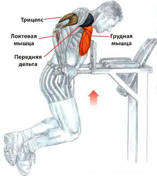 Как накачать мышцы: основные принципы и правила для набора мышечной массы