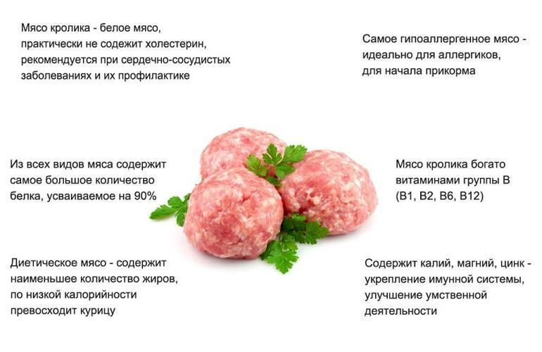 Вред вегетарианства – чем опасен отказ от мяса: мнение врачей