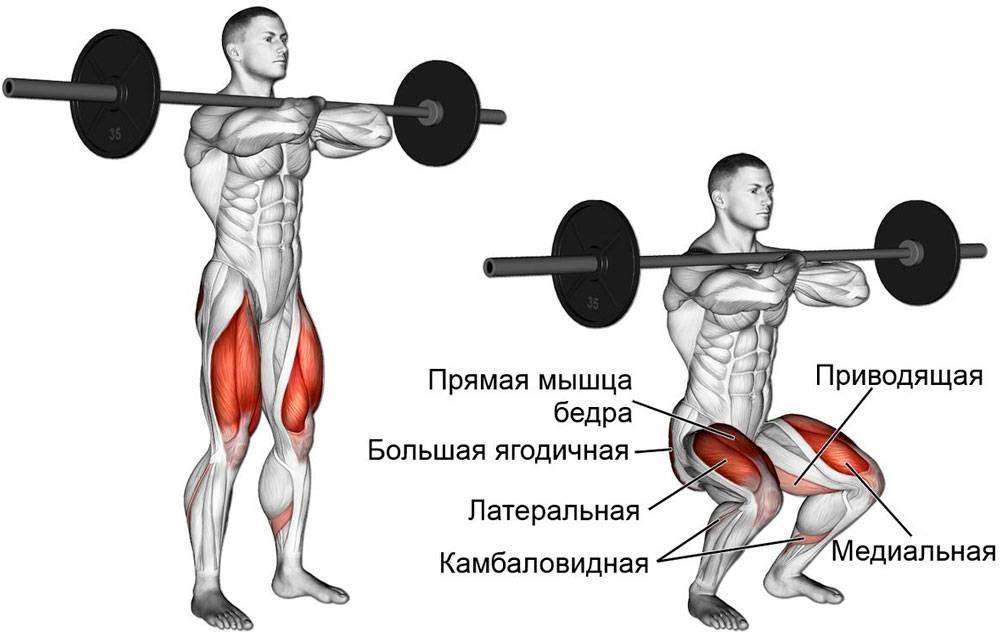Как научиться правильно приседать со штангой на плечах и груди: техника выполнения приседаний для мужчин