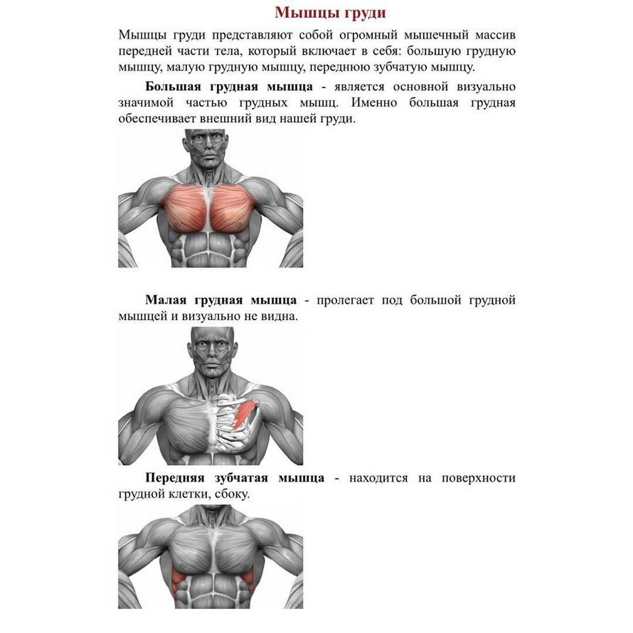 Передняя зубчатая мышца: как накачать + топ 5 упражнений