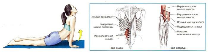 В чем польза растяжки — как правильно растягивать мышцы тела - l'officiel