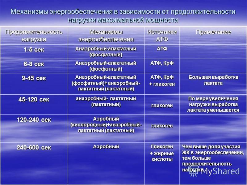 Энергообеспечение организма человека при мышечной работе