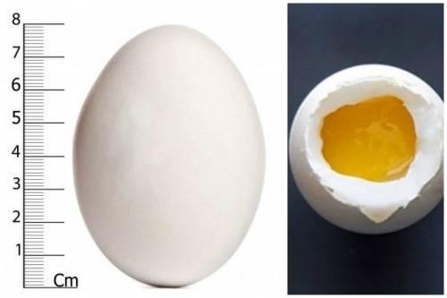 Калорийность 2 яиц: пищевая ценность, способы приготовления, польза и вред