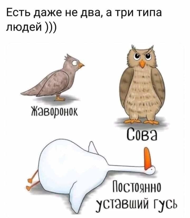 Люди жаворонки, совы и голуби - в чем особенности каждого типа