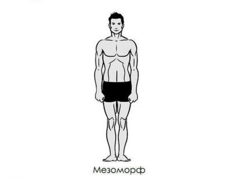Мезоморф —питание и тренировки. как определить и в чем особенности?