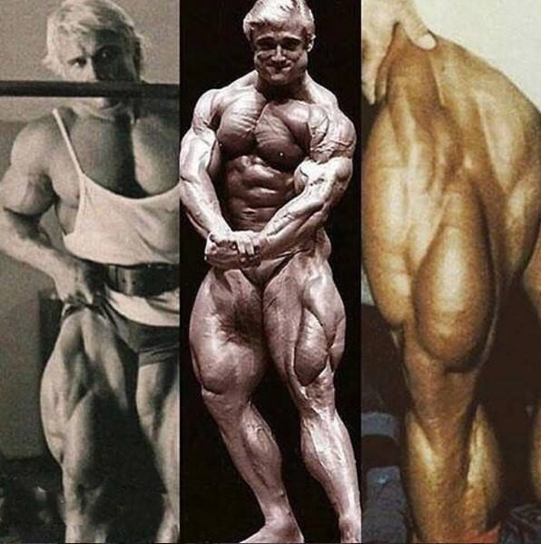 Антропометрия и пропорции тела в бодибилдинге антропометрия и пропорции тела в бодибилдинге
