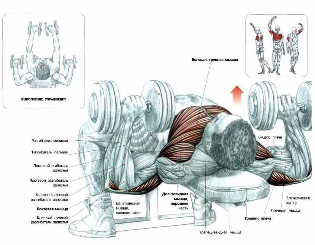 Как накачать грудные мышцы в домашних условиях