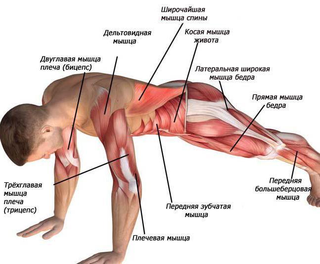 Cуществует ли мышечная память? | спортнаука