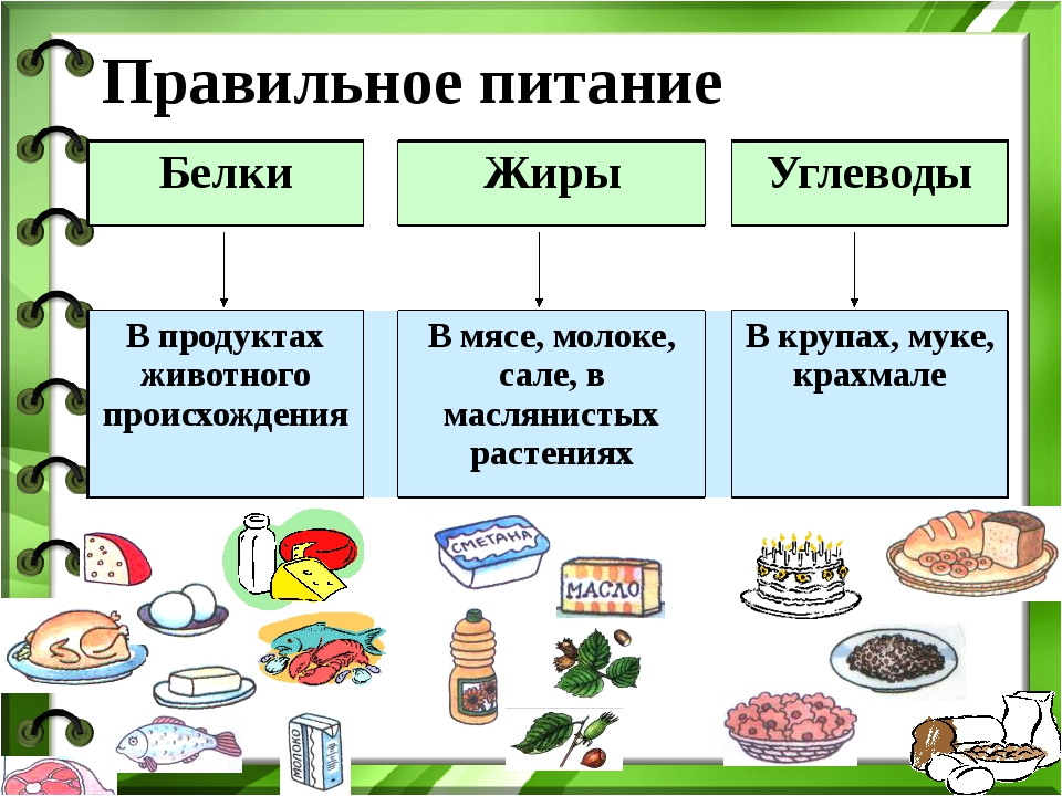 Что такое: белки, жиры и углеводы (сокр. бжу)?