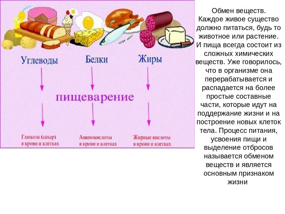 Как ускорить метаболизм: основные продукты для ускорения обмена веществ   блог medical note о здоровье и цифровой медицине