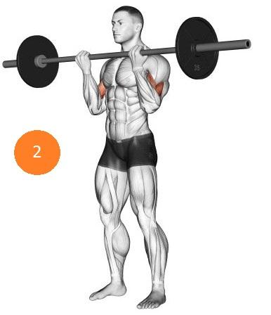 Самое лучшее упражнение для построения мощных и больших бицепсов