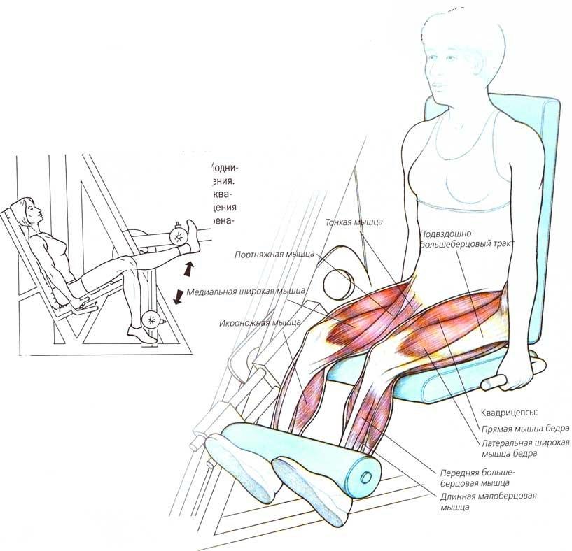 Все об упражнении  разгибание ног сидя