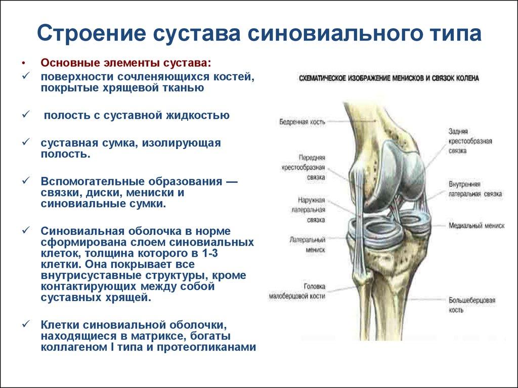 Укрепляем в домашних условия связки и суставы от коленного до плечевого