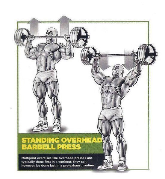 Упражнения на плечи в тренажерном зале: как накачать дельты мужчине в спортзале