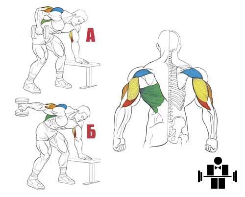 Разгибания руки с гантелью в наклоне: фото и видео упражнения