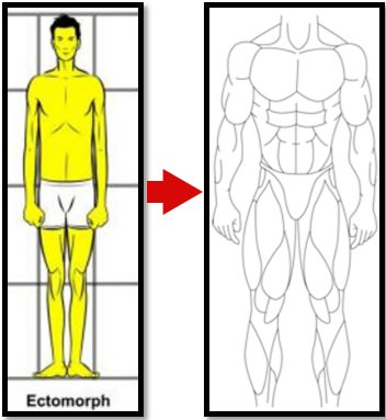 Питание для эктоморфа: советы по выбору рациона