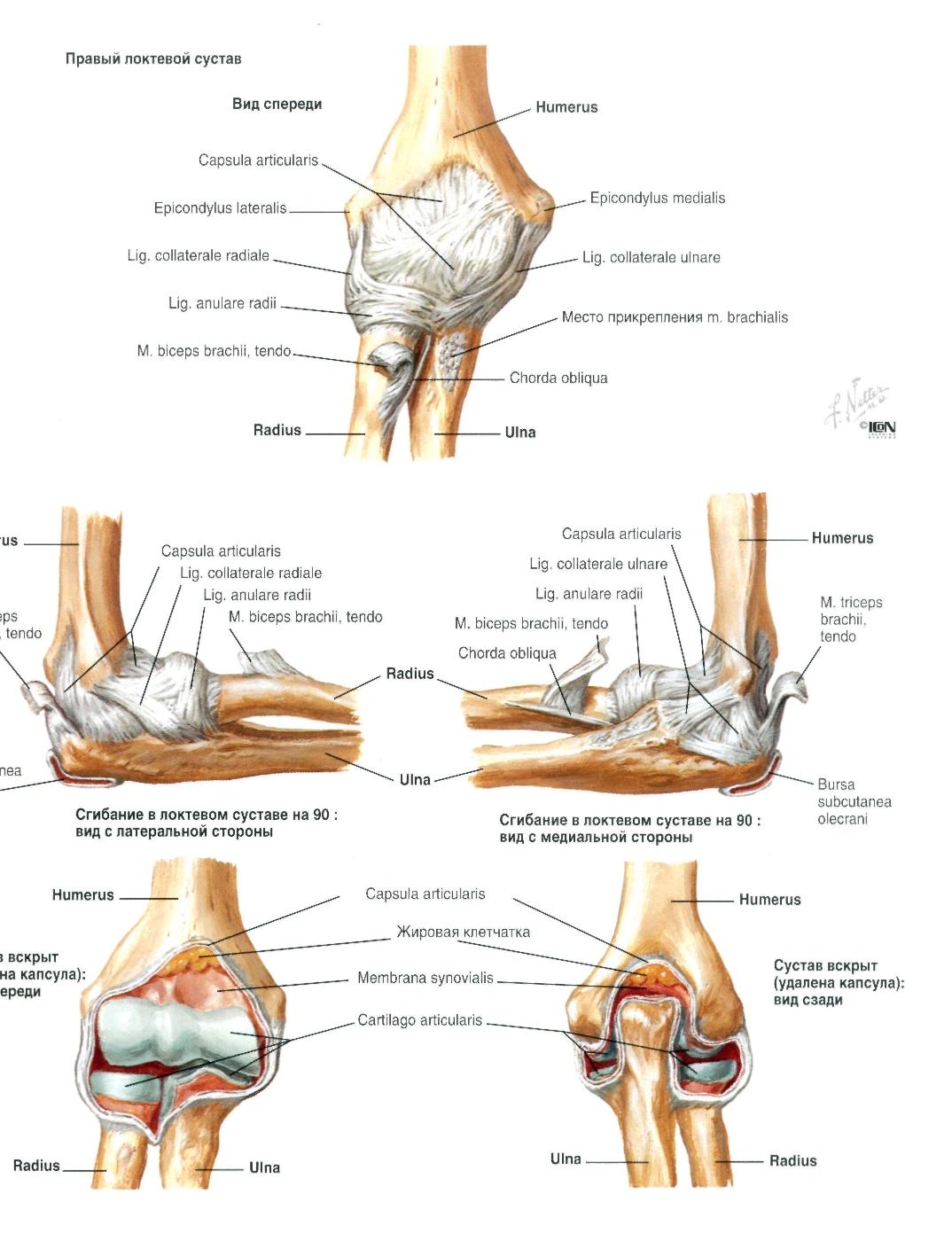 Как укрепить коленный сустав: связки, мышцы, суставной хрящ
