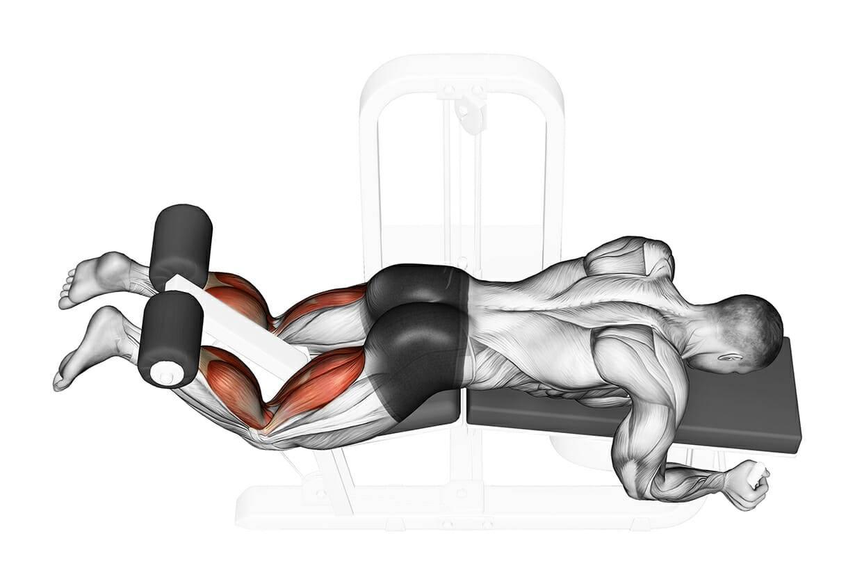 Сгибание ног в тренажере сидя: техника, мышцы, альтернатива