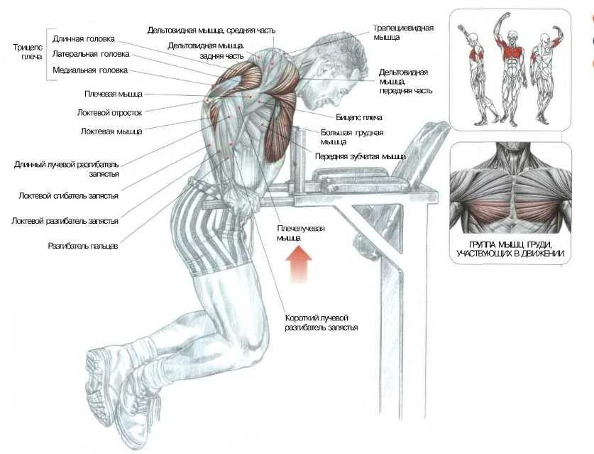 Отжимания широким хватом: стоит ли попробовать упражнение?
